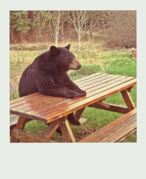 Yogi waiting for the late lunch...Bears Hands, Funny Things, Laugh, Funny Pictures, Funny Stuff, Humor, Yogi Bear, Picnics Baskets, Funny Animal