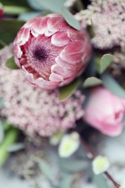 Protea. Had these at my wedding! Lovely.