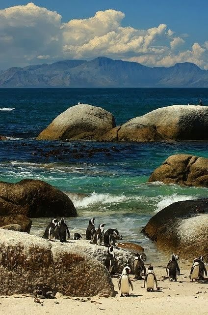 Boulders Beach | Cape Town, South Africa | Famous for its colony of African Penguins.