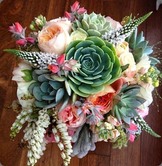 How To Propagate Bridal Bouquet Plant : Best ideas about cactus wedding on mexican
