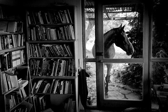 Horses and books, where could you go wrong?