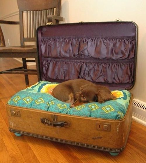 Cute suitcase dog bed!