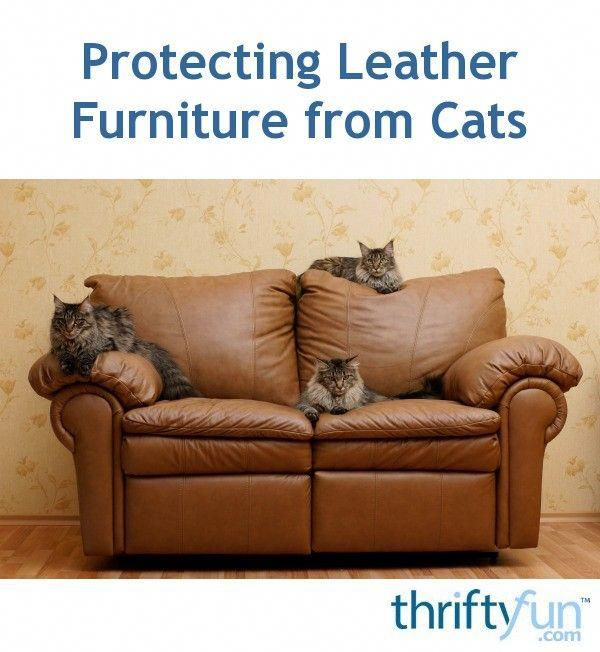 This Is A Guide About Protecting Leather Furniture From Cats One Of The Best Ways To Protect Your Leather Furniture Cat Scratching Furniture Best Couch Covers