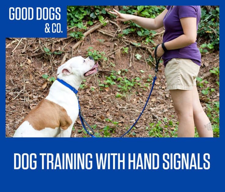 Tips for integrating hand signals into your dog's training ...