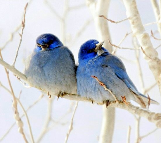 bluebirds of happiness (ღ˘⌣˘ღ)