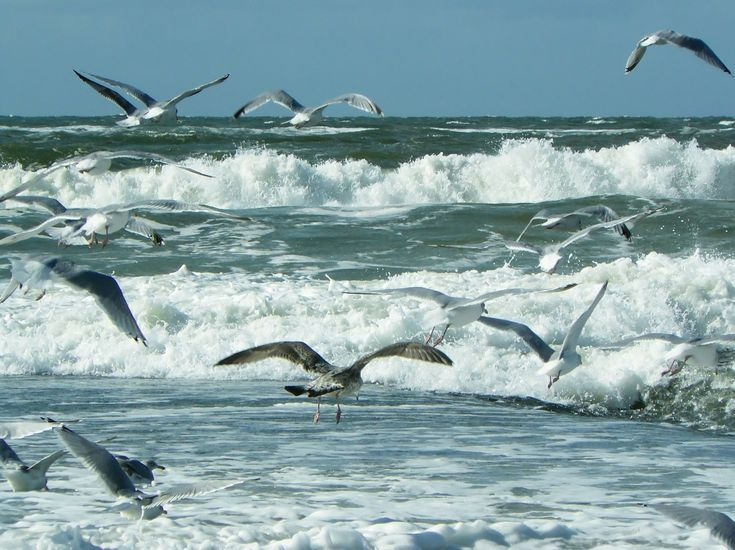 Meer, Strand, Wellen, Nordsee, Wasser, Natur, Brandung