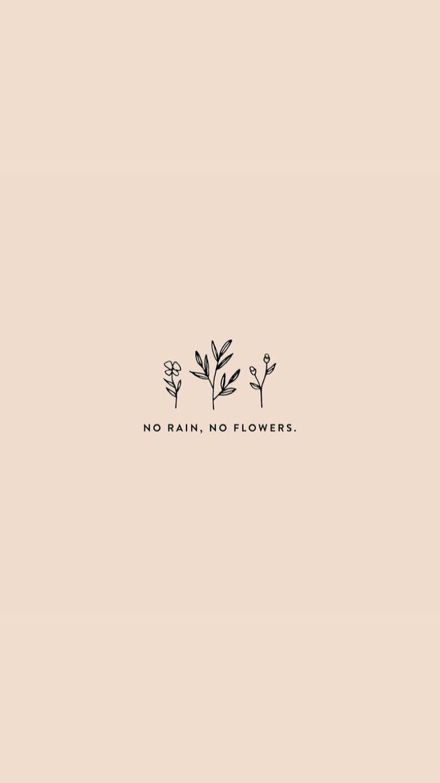 norain #noflowers #quote  Wallpaper quotes, Cute quotes