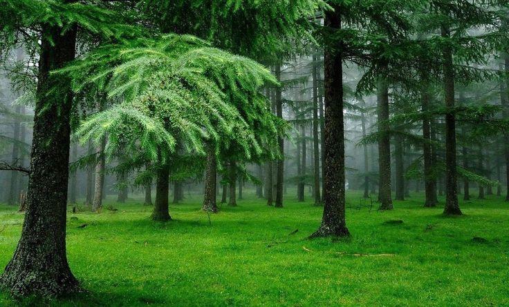 Живые души деревьев  Дело происходило в окрестностях Нижнего Тагила в начале 90-х. Рубили просеку. В бригаде лесорубов оказался один некурящий субъект, да еще и с пытливым умом. Во время перекуров он, чтобы скоротать время, придумал себе «забаву» – считать годовые кольца на спиленных деревьях.  Считал и дивился – этому дереву аж 80 лет, этому – и того больше. Потом обратил внимание, что у всех деревьев периодически обнаруживаются какие-то ущербные кольца. И цвет у них нездоровый, и они не…