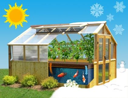 L'Aquaponie est une alternative intéressante ou les plantes et les poissons coexistent en harmonie quatres saisons!