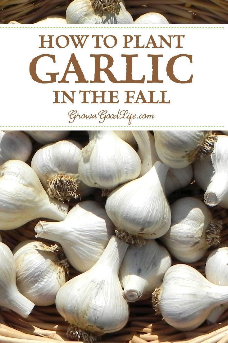 1ced640b109c84d73350295d9b212355 - How To Get Rid Of Garlic Smell In Container