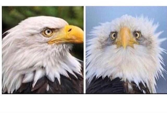 Now I understand why American Bald Eagles are always photographed from the side. http://ift.tt/2rkOlB4 #lol #funny #rofl #memes #lmao #hilarious #cute