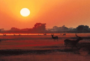 Zambia - KAFUE NATIONAL PARK