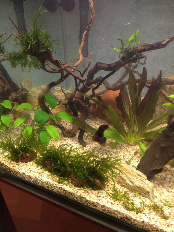 18 best Customers aquascapes images on Pinterest | Exotic, Lava and ...