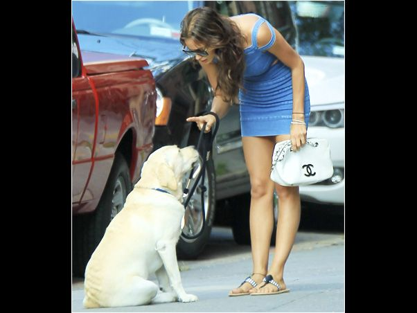 """Irina Shyk, namorada do craque português dos gramados, Cristiano Ronaldo, passeou com seu labrador pelas ruas de Nova York . Em determinado momento da caminhada, a modelo russa, que usava um micro vestido azul, parou no meio da calçada e deu uma bronca no cachorro, que sentou e ouviu atentamente as """"recomendações"""" de Irina."""