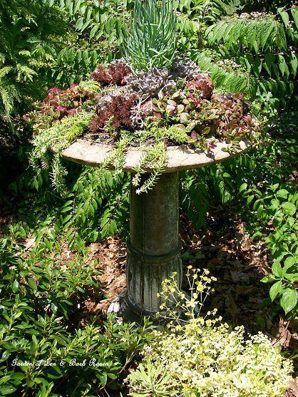 Turn a birdbath into a succulent garden