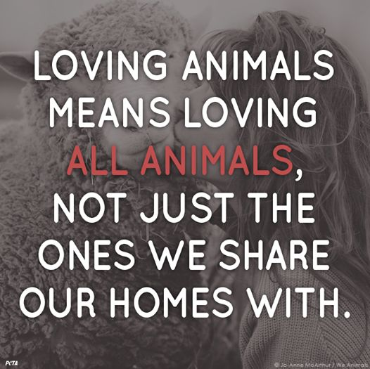 Love all Animals - speciecism is the same as racism and other forms of discrimination!