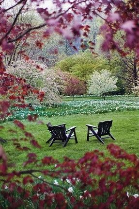 Narcissus and flowering fruit trees at Chanticleer in Wayne, Pennsylvania