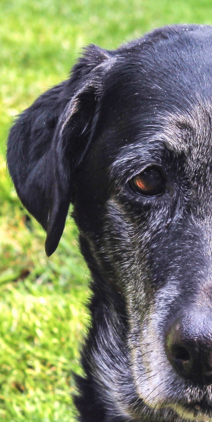 Old dogs are great