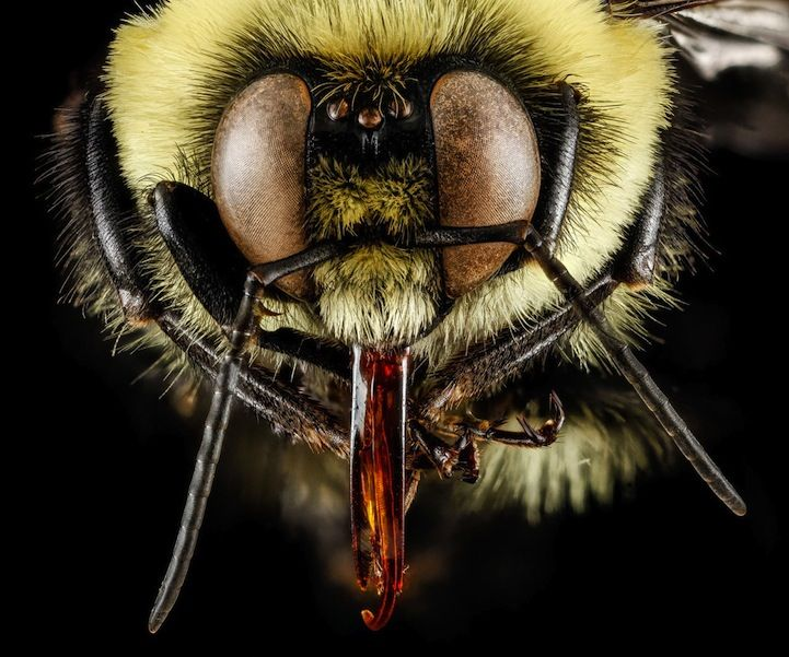New Fascinating Macro Photos of Bees by the United States Geological Survey - My Modern Met