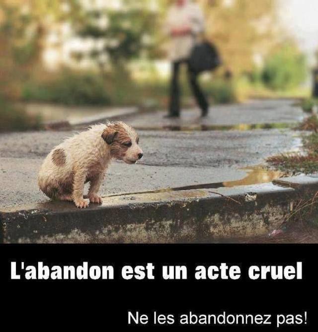 L'abandon est un acte cruel et criminel