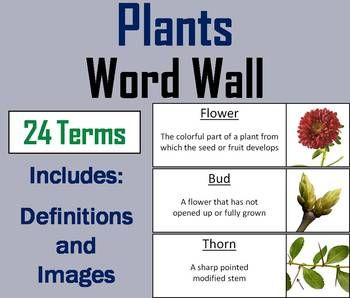 Parts of a Plant Word Wall Cards