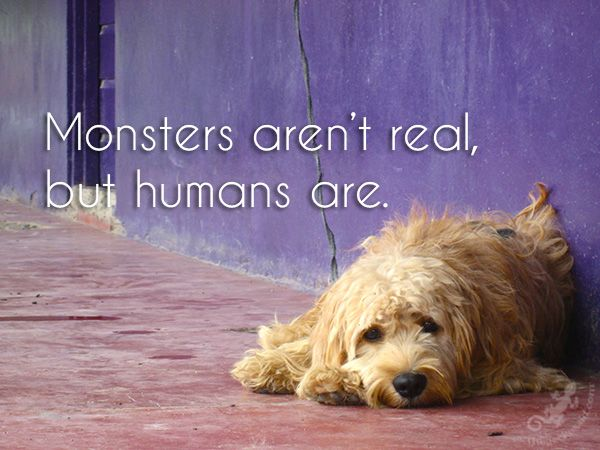 Monsters aren't real, but humans are.  #monsters #real #animal #cruelty #abuse #humans #quotes  © 2016 The Gecko Said – Beautiful Quotes