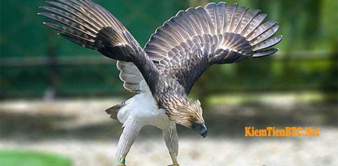 Thú chơi chim ở Đakrông - Chim săn mồi Đại Bàng - Chúa tể loại chim - Chia sẻ bạn cách kiếm tiền online Bitcoin (BTC) miễn phí từ A-Z - KiemTienBTC.Net