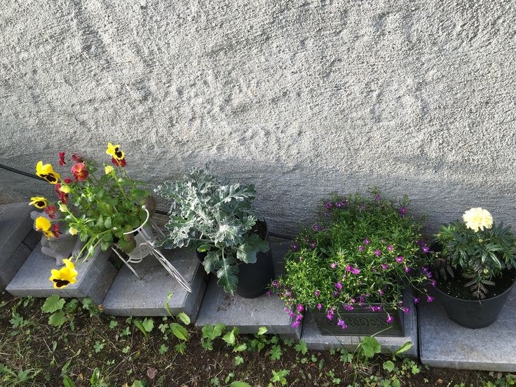 "Har laga ei ""trapp"" ned langs huset som æ har pynta med blomster æ sjøl har sådd :)"