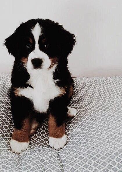 cute | Puppy | Dog | animal | pets