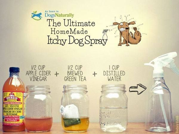 If your dog itches and scratches, you need to do something before the situation gets worse. This homemade itchy dog spray is just one of the natural remedies you will find on our site. First try this easy homemade itchy dog spray from Dogs naturally magazine. It will stop the itching and scratching in no time. Also check out this DIY all natural anti-flea dog shampoo recipe. It helps keep those nasty fleas away from your pet. Source :http://bit.ly/1ymnpKC