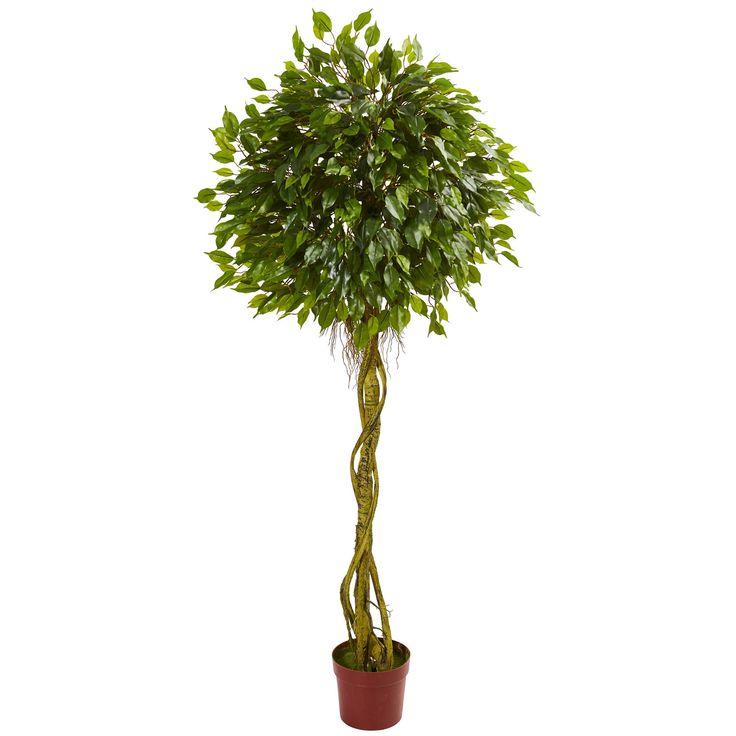 best 25 ficus ideas on pinterest indoor tree plants indoor green plants and indoor plants. Black Bedroom Furniture Sets. Home Design Ideas