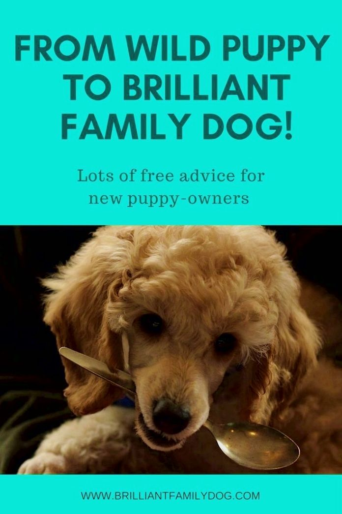 Dog Training Ideas By Taking Your Pet Dog Along With You When You