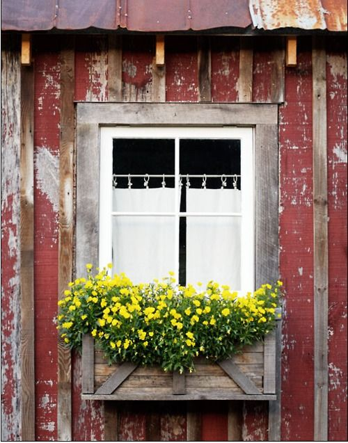 yellowWindowboxes, Windows Boxes, Rustic Look, Windows Flower Boxes, Gardens, Red Barns, Yellow Flower, Country, Old Barns
