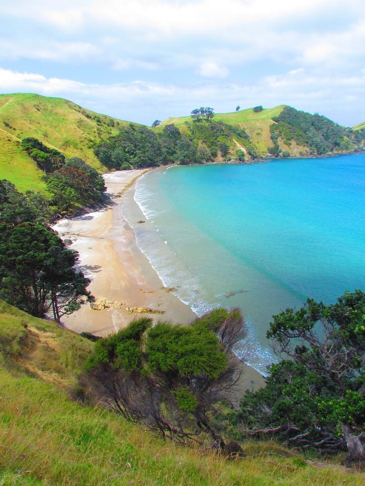 Great Barrier Island, NZ, 2012. Photo by Sophia Egan-Reid.