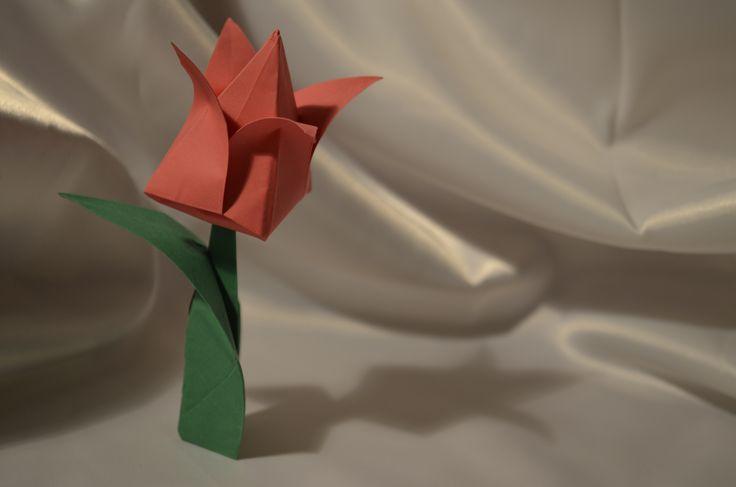 Origami Tulip❤️