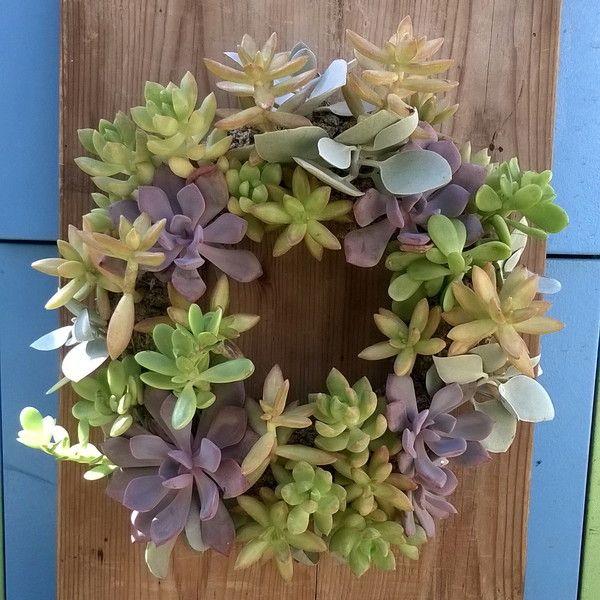 Ghirlanda di piante succulente vive di So Cute su DaWanda.com