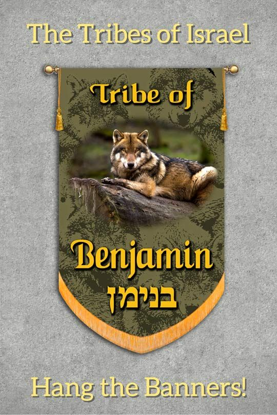 "The Blessings of the Tribe of Benjamin Jacob's Blessing - Genesis 49:27 ""Benjamin is a ravenous wolf; In the morning he devours the prey, And in the evening he divides the spoil."" Moses Blessing - Deuteronomy 33:12 ""Of Benjamin he said, 'May the beloved of the Lord dwell in security by Him, Who shields him all the day, And he dwells between His shoulders."" Benjamin was the youngest son of Jacob and Rachel, and the only full brother of Joseph."
