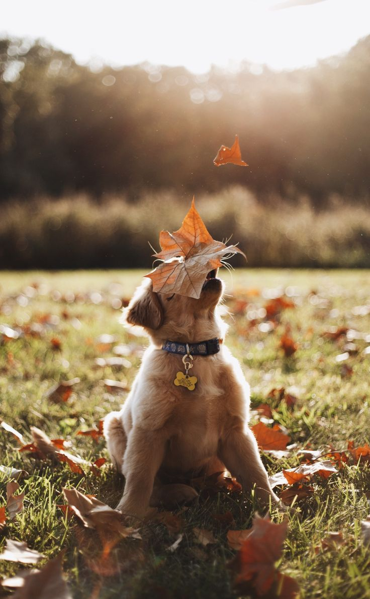 Catch a falling leaf!