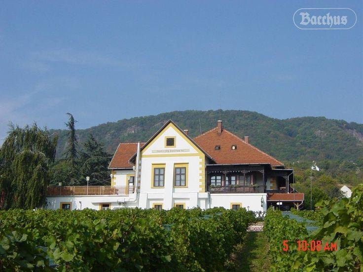 Bacchus - Badacsony - Lake Balaton - Hungary