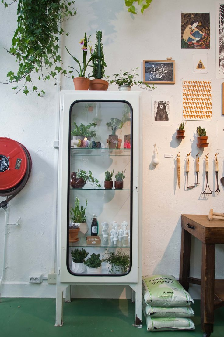 Wildernis Amsterdam | plants and city gardening shop | green composition | cactus | white pharmacist cabinet