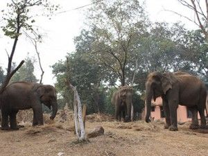 Centre to create Buffer Zones around 600 national parks and sanctuaries