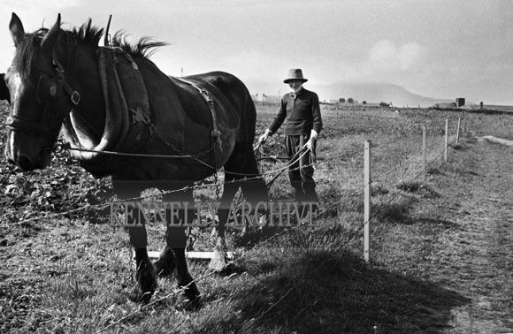 Ploughing on Valentia Island - 1953