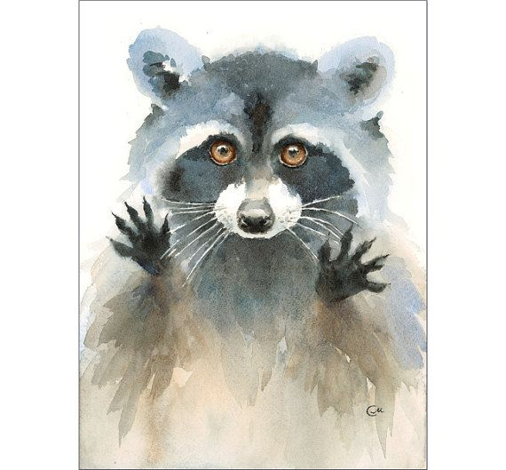 Watercolor Raccoon  Original Painting 8x11 inches by CMwatercolors