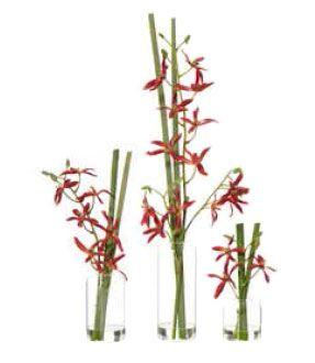 Star Orchid (set of three)
