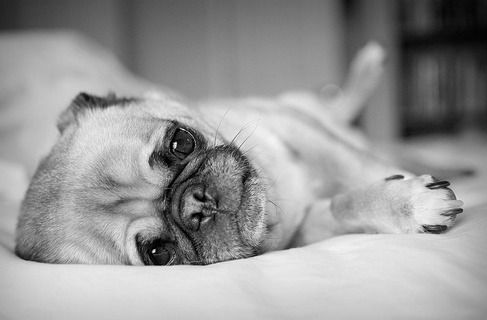 Do I really have to get up now? Can't we just stay in bed?