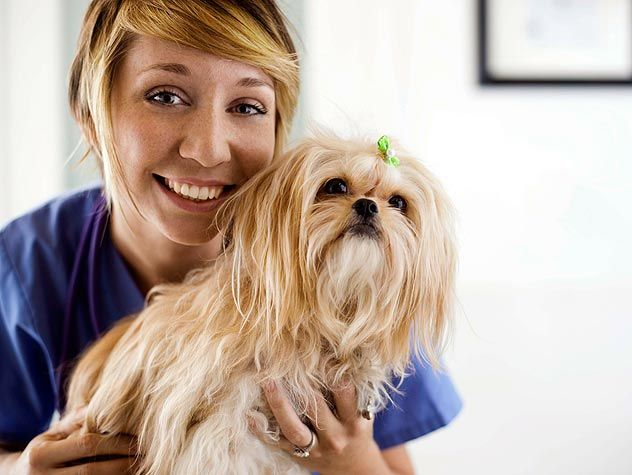 Best  Vet Tech Job Description Ideas On