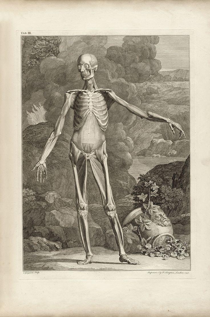37 besten Écorché Bilder auf Pinterest | Anatomieverweis ...