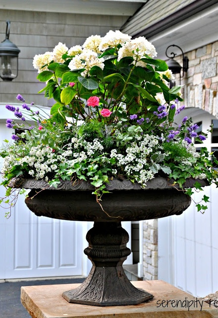Gorgeous post-she shares a bunch of container gardens with which plants are in each one!