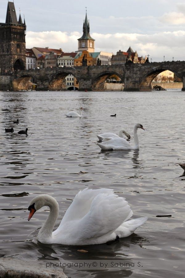 What a lovely view of Prague of Czech Republic.