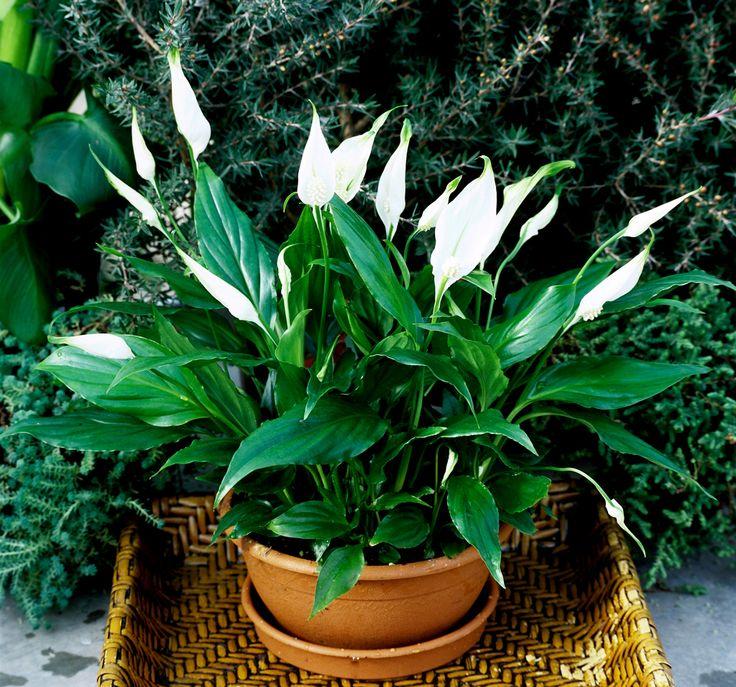 Αυτά τα φυτά είναι βόμβες οξυγόνου -Πάρτε τουλάχιστον ένα σπίτι σας | Newsone.gr